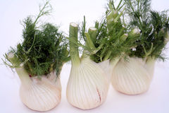 Fennel vegetables Royalty Free Stock Image