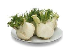Fennel vegetables Stock Images
