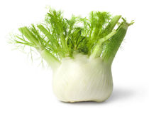 Fennel  on white background Stock Photo