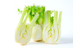 Fennel on white background Royalty Free Stock Photo