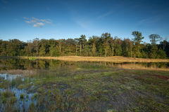 Fennlandschaft mit Morast auf dem Vordergrund Stockfoto
