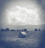 Feno em um campo preto e branco Imagens de Stock Royalty Free