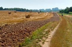 Feno torcido no campo, pacotes de feno, campos com monte de feno torcidos Fotografia de Stock