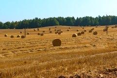 Feno torcido no campo, pacotes de feno, campos com monte de feno torcidos foto de stock