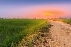 Fenomeno di alba al giacimento del riso Fotografie Stock Libere da Diritti