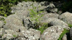 Fenomeno naturale del fiume di pietra nel parco naturale di Vitosha vicino a Sofia, Bulgaria L'area dorata dei ponti stock footage
