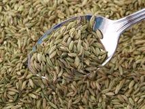 Fenouil sec sur une cuillère. Photos libres de droits