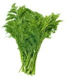 Fenouil vert frais Photo stock