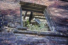 Fensteröffnung abgedeckt durch Vegetation in der Backsteinmauer lizenzfreie stockfotografie