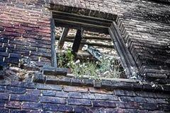 Fensteröffnung abgedeckt durch Vegetation in der Backsteinmauer lizenzfreie stockfotos