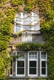 Fenster überwältigt durch üppigen grünen Efeu Lizenzfreies Stockfoto