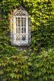 Fenster überwältigt durch üppigen grünen Efeu Lizenzfreies Stockbild