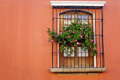 Fenster in Antigua Guatemala Stockfoto