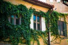 Fenster auf alter Wand Lizenzfreie Stockfotos