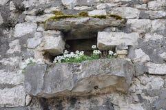 Fenster auf der alten Steinwand Stockbild