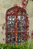 Fenster in der Rebe Stockbilder