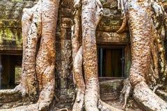 Fenster in der Ruine Ta Prohm, Kambodscha Lizenzfreies Stockbild
