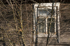 Fenster des alten Blockhauses und des Baums Stockfoto