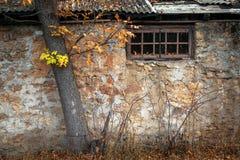 Fenster des alten Hauses unter dem Baum Stockbild