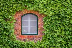 Fenster durch Grün Stockfotos