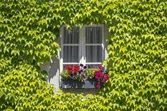Fenster in einem Bauernhaus, gestaltet durch Efeu und Blumen stockfoto