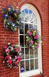 Fenster eines Blumen-Systems Stockfoto