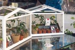 Fenster eines Hanfs kaufen in Amsterdam mit Hanfbetriebscolt Stockfotografie