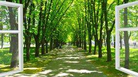 Fenster geöffnet zum Park mit vielen grünen Bäumen Lizenzfreie Stockfotografie