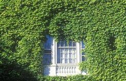 Fenster gestaltet durch Efeu, stockfotos