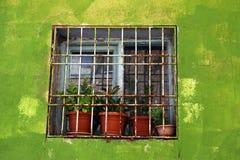 Fenster gestaltet durch eine grüne Wand lizenzfreie stockfotografie