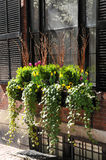 Fenster-Kasten-Blumen-Anordnung Stockfotos