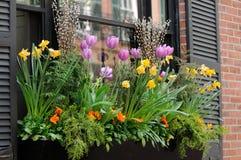 Fenster-Kasten-Blumen-Anordnung Stockbilder