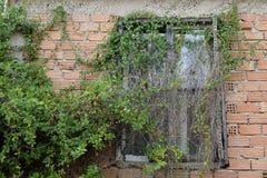 Fenster mit überwucherter Kriechpflanzenanlage stockbild