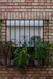Fenster mit Anlagen Stockfotos