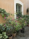Fenster mit Anlagen und Blumen Lizenzfreie Stockfotos