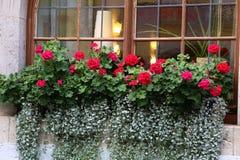 Fenster mit Blumen Lizenzfreie Stockfotos