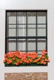 Fenster mit Blumen Stockfotografie