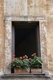 Fenster mit Blumen in Rom, Italien. Lizenzfreies Stockbild