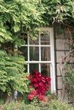 Fenster mit Blumen und Anlagen Lizenzfreie Stockfotos