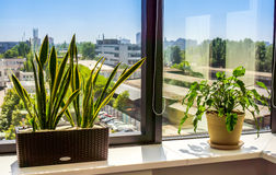 Fenster mit Blumentopf Stockfoto