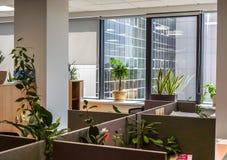 Fenster mit Blumentopf Stockbilder