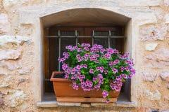 Fenster mit Blumenvase Stockbild