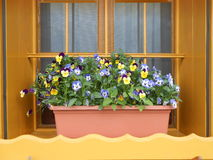Fenster mit bunten Blumen Stockbild
