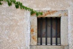 Fenster mit dem Rebstock angebracht Stockbild