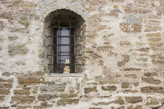 Fenster mit einem Gitter und einer Katze Lizenzfreies Stockfoto