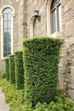 Fenster mit Gärten Stockbilder