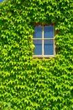 Fenster mit grünen Blättern Stockfotografie
