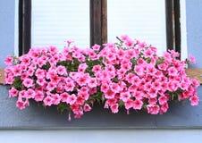 Fenster mit lila Blumen Stockfotografie
