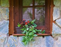 Fenster mit schöner Anlage auf dem Fensterbrett Lizenzfreies Stockbild