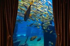 Fenster mit Vorhang und Drapierung Lizenzfreies Stockfoto